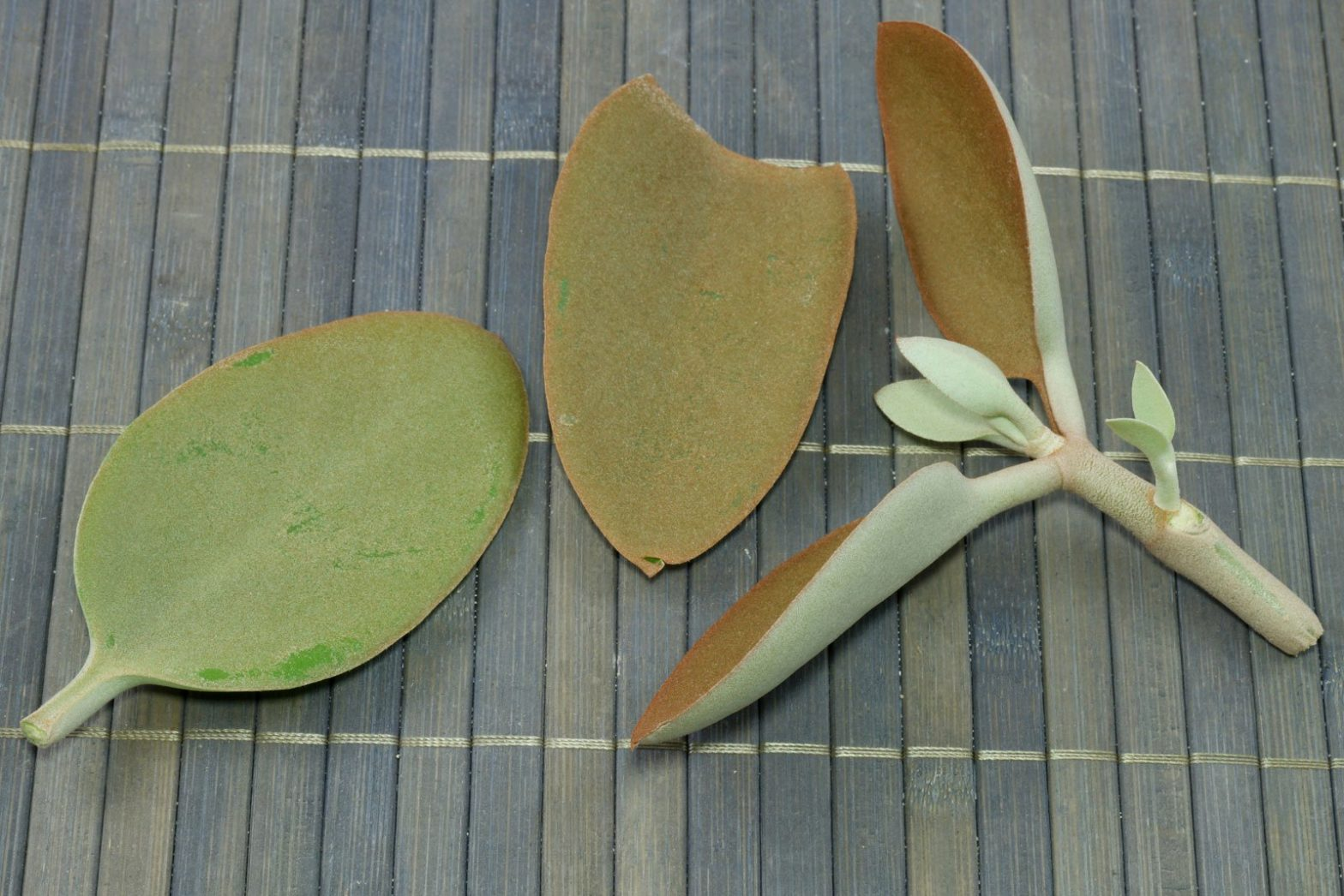 Copper Spoons cuttings